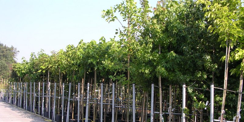 Bomen in pot