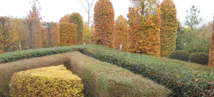 foto bladverl. haagplanten