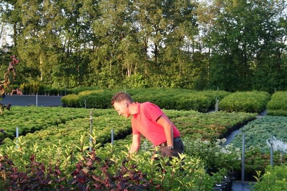 Controle van de planten op de kwekerij