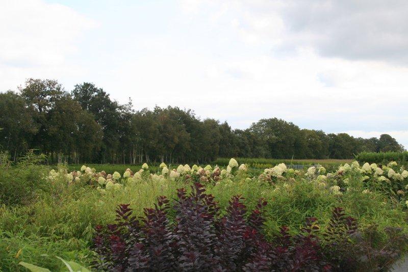 Herfstkleuren op de kwekerij