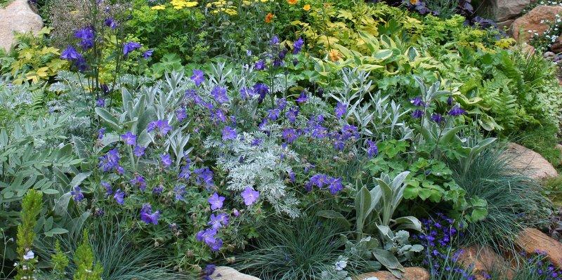Vaste planten in soorten